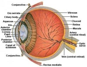 micro eye
